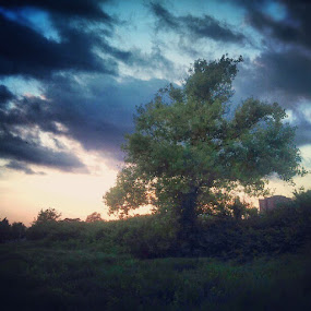 The tree of wisdom #instamood #trees  #nature by Mirna Abaffy - Instagram & Mobile Instagram