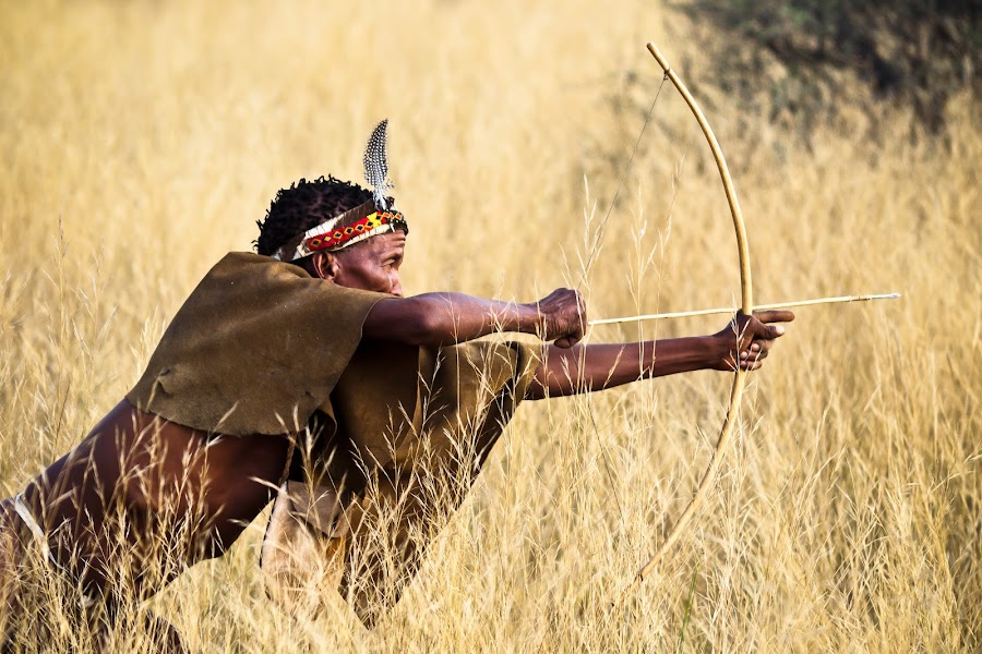 Bushman tirant à larc by Olivier Tabary - People Portraits of Men ( bushman africain, chasseur, exotisme, chasse, voyage, arc, guerrier, herbe, namibie, afrique, savane, tireur à l'arc )