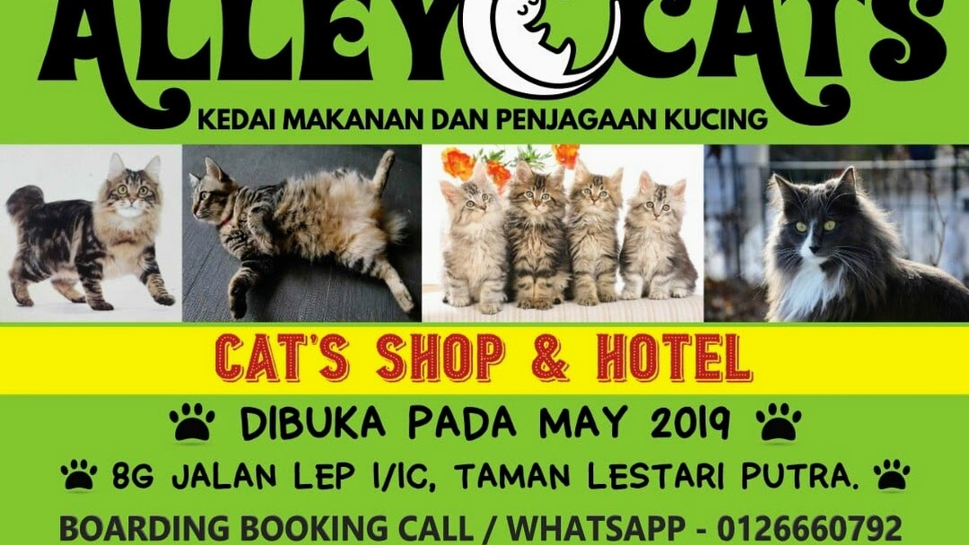 Alley Cats Shop Hotel Pet Store In Lestari Putra