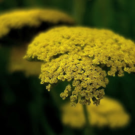 yellow and dark by Bernarda Bizjak - Nature Up Close Gardens & Produce