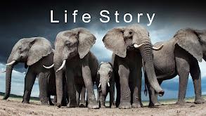 Life Story thumbnail
