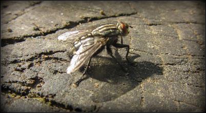 """Photo: """"..Mustele au doar o plăcere imensă de a fi enervante?.."""" :) """"Realitatea este că muștele sunt necrofage și aterizează pe noi întrucât se pare că, corpul uman, degajă o căldură și un miros pe care muștele îl asimilează cu hrana."""" - Turda, pe Calea Victoriei, la bloc - 2019.05.26  https://www.facebook.com/photo.php?fbid=2941570052537400&set=a.1081408888553535&type=3&theater"""