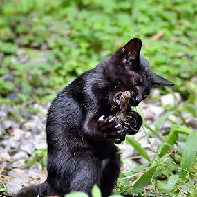 Black Kitten Biting A Branches by Rony Nofrianto - Animals - Cats Playing ( black kitten, playing cat, cat & branches, playing kitten, black cat )