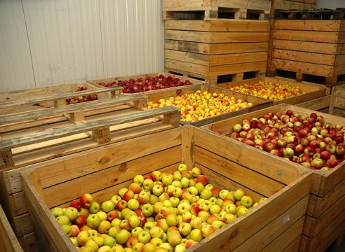 Картинки по запросу промышленный холодильник для фруктов