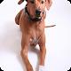 狗奴们的游乐园,狗狗养护、美容、训练--用品选购知识--狗狗医疗、宠物狗医院、狗民资讯 APK