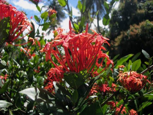 Morne Coubaril Estate & Gardens, Soufriere, St. Lucia