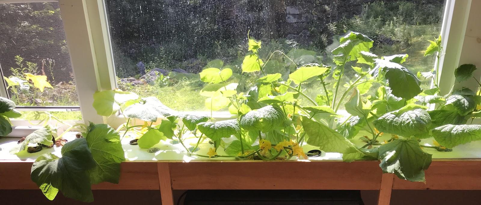 Home aquaponic