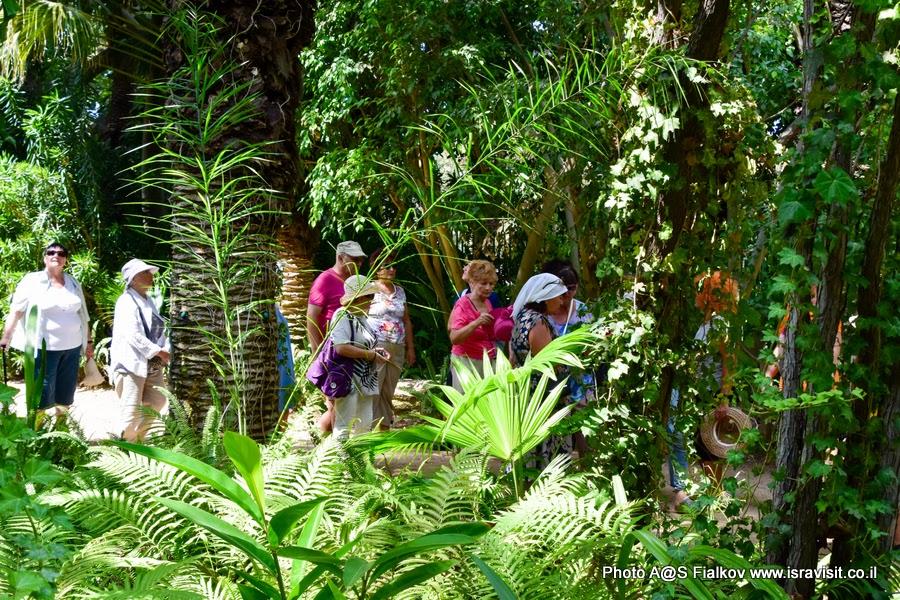 Экскурсия в Тель Авиве. Тропический сад.