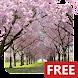 春の桜のライブ壁紙 Cherry Blossom Live Wallpaper FREE - Androidアプリ