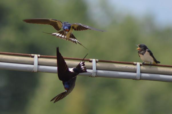 Uccelli in volo d'estate di Laragazzaconilcappello