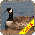 Goose hunting calls Pro. Waterfowl hunting decoy icon