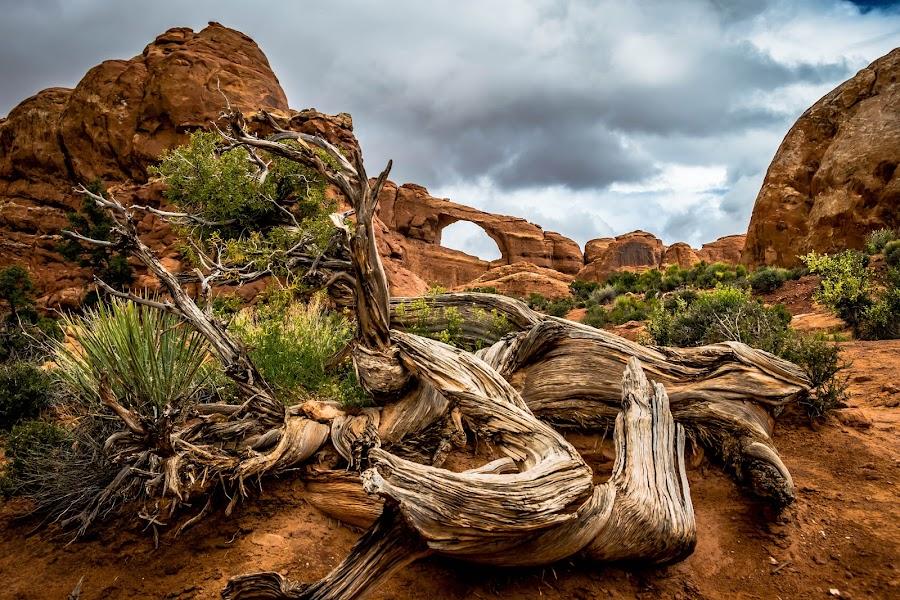 Arches National Park by Keith Ellington - Landscapes Mountains & Hills
