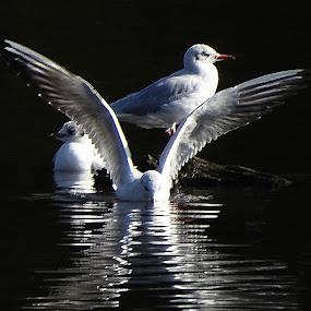 by Ramade Genevieve - Animals Birds