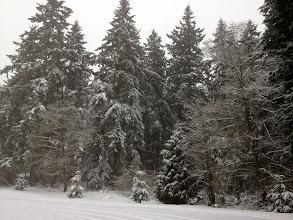 Photo: 2012 Jan snow - 0004