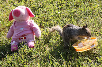 Photo: (Year 2) Day 359 - Squirrel Eating Humous