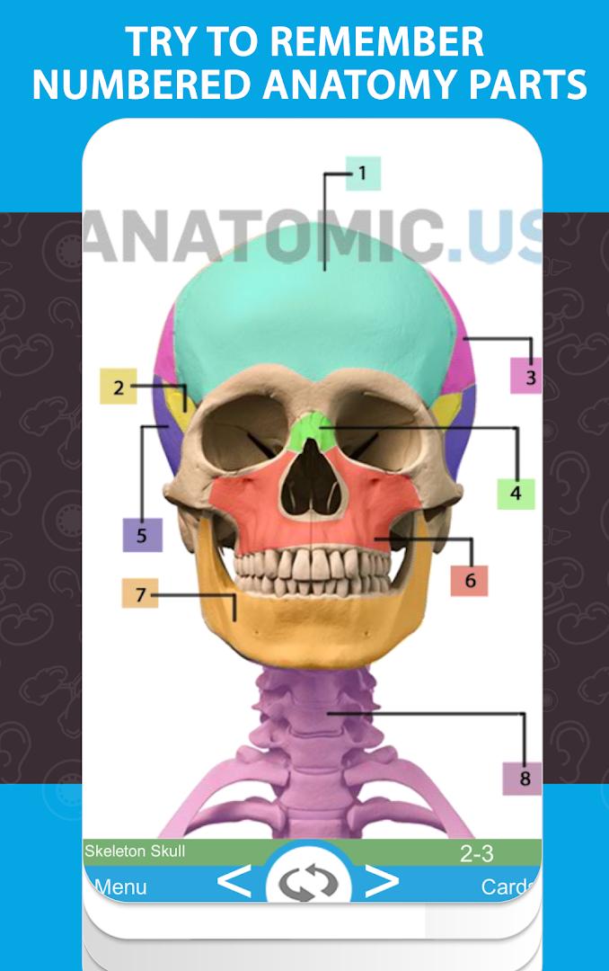 Anatomy Flashcards - Revenue & Download estimates - Google Play ...