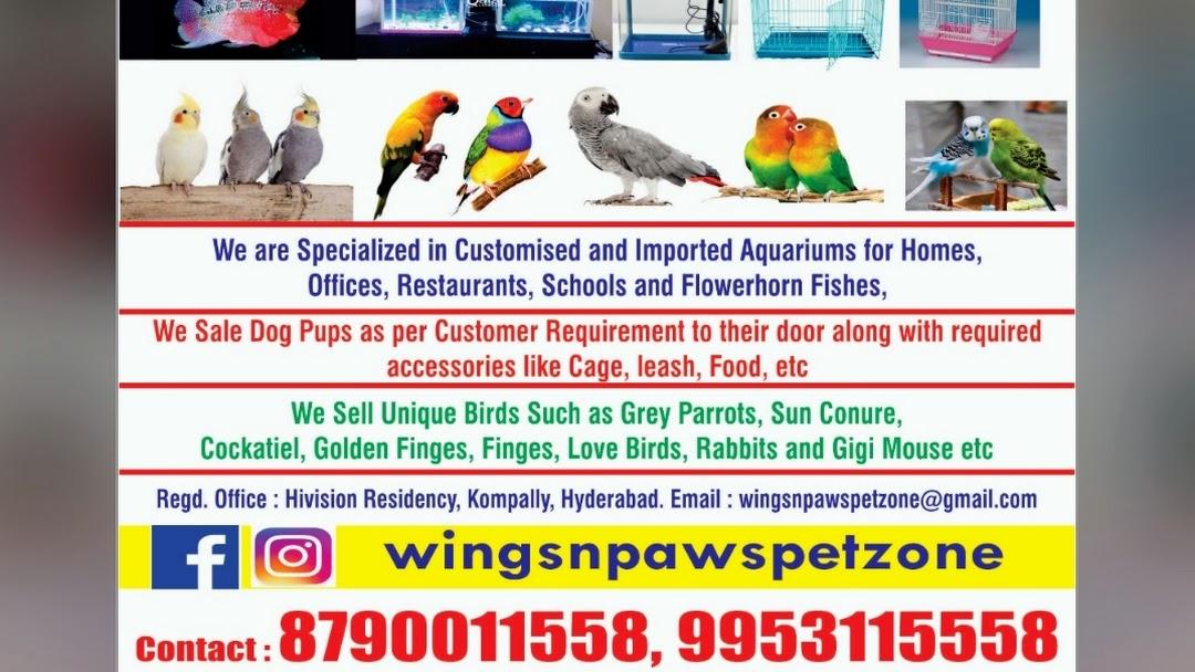 Wings N Paws Pet Zone Pet Shop In Hyderabad