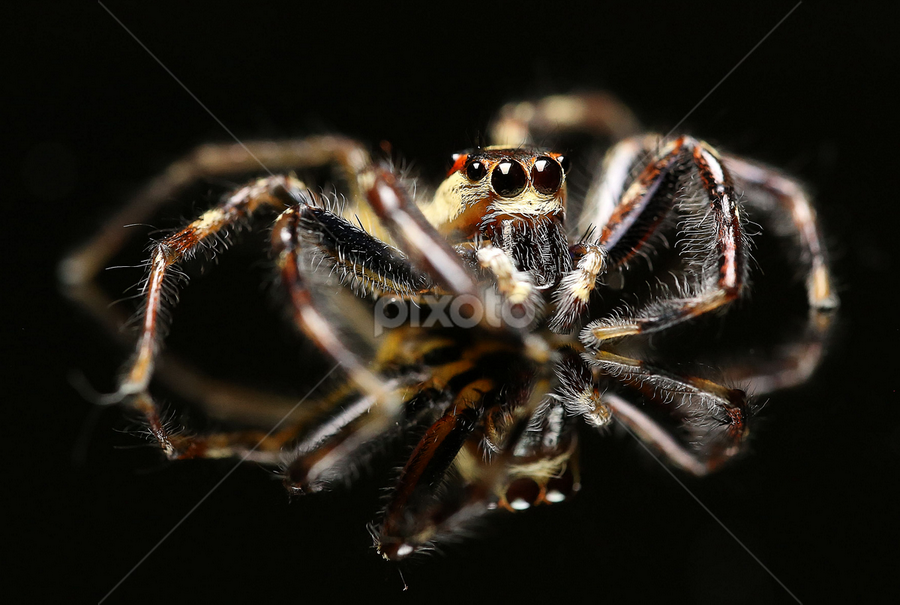 Ruby in Action by Esther Pupung - Animals Insects & Spiders ( reflection )