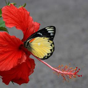 by Yustinus Slamet - Nature Up Close Flowers - 2011-2013