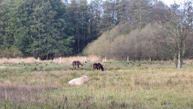 Photo: im Tal der Langballigau