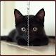 Black Kitty Zipper Lock