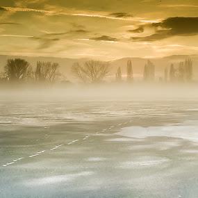 Frozen Alte Donau in Vienna by Frederik Schulz - Landscapes Weather ( wien, vienna, winter, fog, ice, snow, donau, danube, swimming, austria )