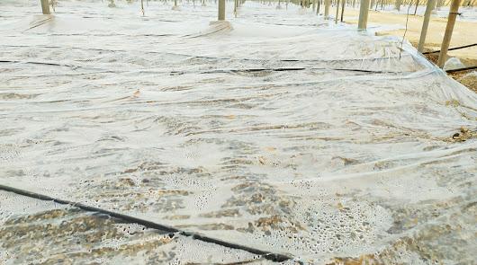 La desinfección de suelos agrícolas de alta calidad