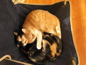 Photo: Kitty love.
