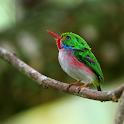 الطيور المتشابهة icon