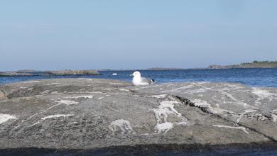 Photo: Seagull