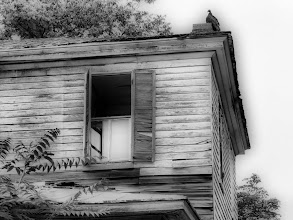 Photo: Vulture house in Annapolis.