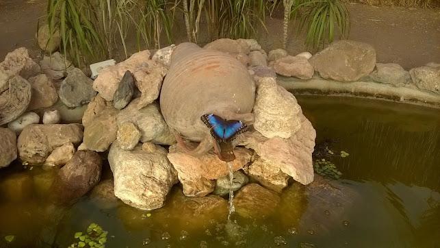 El Mariposario de Níjar recibe cada temporada a numerosos centros escolares