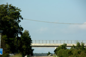 Photo: Year 2 Day 230 - Rope Bridge for Wildlife Across the Pacific Highway