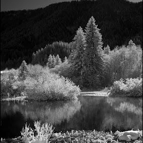 by Jani Novak - Black & White Landscapes ( zelenci winter sava snow )
