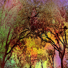 Rainbow Trees by Edward Gold - Digital Art Things ( forest, green, yellow, artistic, scenic view, digital art, red, orange, digital photography, reds, purple, colorful, tress,  )