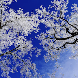 Tree tops. by Denton Thaves - Nature Up Close Trees & Bushes ( tree tops )
