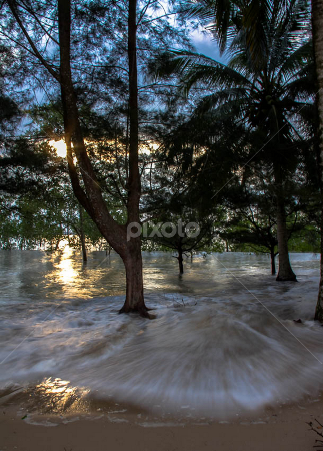 Flooded forest. by Victor Sim - Landscapes Waterscapes ( tides, forest., waves, trees, beach )