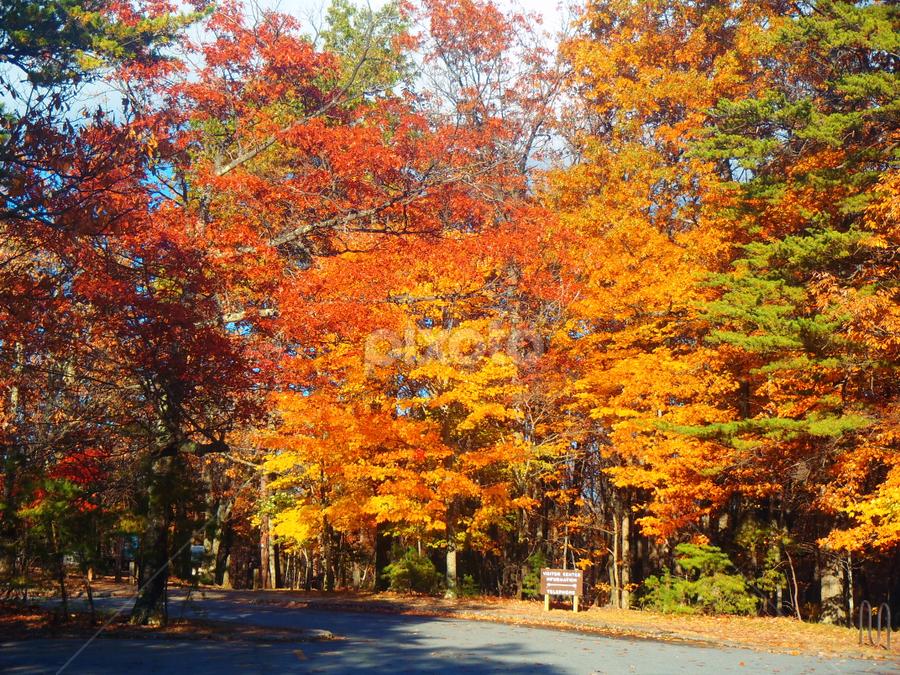 Walk by Liz Stonich - City,  Street & Park  City Parks
