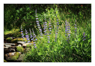 Photo: Eastern Sierras-20120716-530