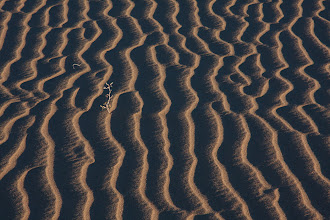 Photo: Life in the desert