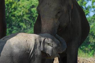Photo: Elephant breeding & training center ...