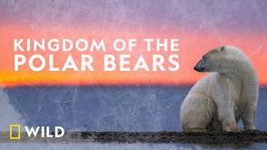 Polar Bear Town thumbnail