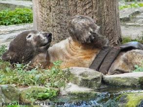 Photo: Jetzt ist es aber erst einmal genug, findet Knut ;-)