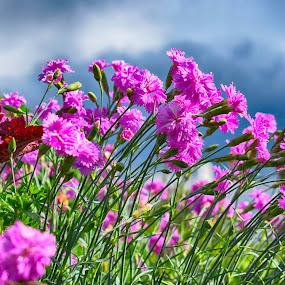 by Natalie Zvonar - Flowers Flower Gardens (  )
