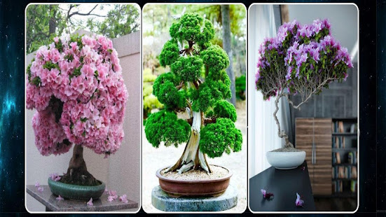 Bonsai Plant Ideas Apps On Google Play