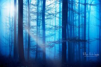 Photo: Light Box Blue's www.naturephotographie.com