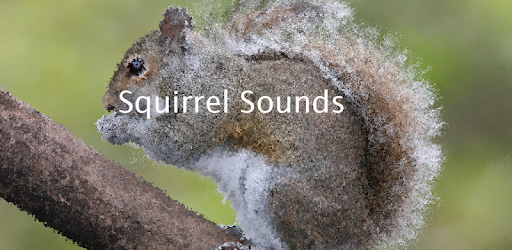 Squirrel Sounds ~ Sboard pro - Apps on Google Play