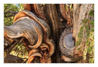 Photo: Eastern Sierras-20120715-278