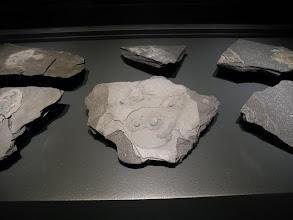 """Photo: Gabon fossils, 2.1 Ga years old...Mathias HARZHAUSER, Directeur de la partie Géologie-Paléontologie du Musée NHM a déclaré : """"J'ai souhaité présenter ces fossiles comme des diamants."""""""