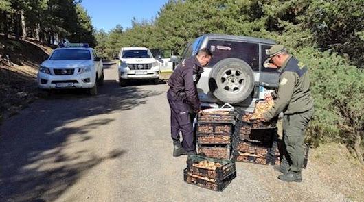 Una de las intervenciones de los agentes para decomisar varios kilos de setas.
